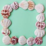 Flat white pink brown sea shells arranged in frame on light green turquoise pastel background. Copy space, template for card, post. Er, menu, Flat lay Royalty Free Stock Image