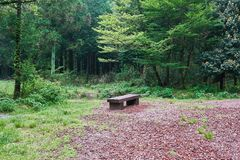 A flat wooden bench in the middle of Saryuni Forest on a dirt pathway in Jeju Isand, South Korea Royalty Free Stock Photo