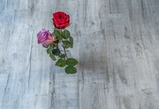 Flatbed shot of two blooming roses on a grey wooden background. One red rose and one pink rose. Flatbed shot of two blooming roses on a grey wooden background royalty free stock photo
