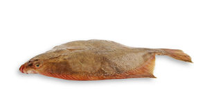 Flatfish. Stock Photos