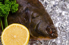Flatfish. The fresh flatfish for cooking Stock Photography