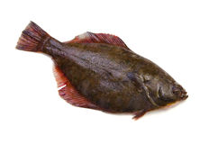 Flatfish. Fresh flatfish on white background Royalty Free Stock Images