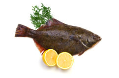 Flatfish. Fresh flatfish on white background Stock Photos
