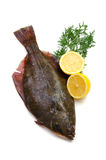 Flatfish. Fresh flatfish on white background Royalty Free Stock Photography