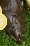 Flatfish Stock Image