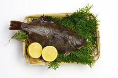 Flatfish Stock Photography