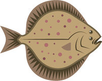flatfish Fotografia de Stock