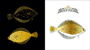 Flatfish. Three stylized sketches of a flatfish made with gold and dark green colors on white and black background. Contour of a fish and a fill can be easily Stock Images