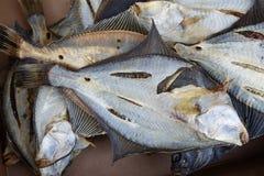 Flatfish. Stock Photography