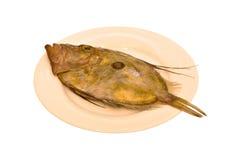 Flatfish Royalty Free Stock Images