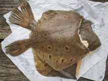 Flatfish Stock Image