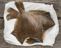Flatfish Royalty Free Stock Image