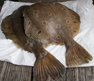 Flatfish Royalty Free Stock Photos