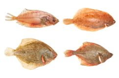 Flatfish group. Group of fresh flatfish, sole,brill, and place isolated on white Stock Photo
