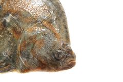 Flatfish head isolated. Sea flatfish head isolated on the white background Stock Photography
