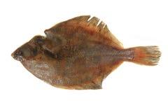 Flatfish isolated Royalty Free Stock Photo