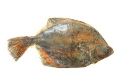 Flatfish isolated. Sea flatfish isolated on the white background Royalty Free Stock Photo