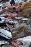 Flatfish, mackerel, surmullet Royalty Free Stock Image