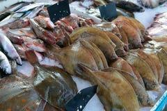 Flatfish, mackerel, surmullet Royalty Free Stock Photo