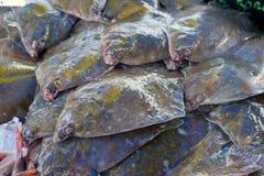 Flatfish on the stand Royalty Free Stock Photo