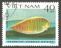 Flatfish, Zebra Sole. Vietnam - stamp 1982, Multicolor Edition Marine Fauna, Series Fish  Soles and Flatfish, Zebra Sole, Zebrias zebra Royalty Free Stock Image