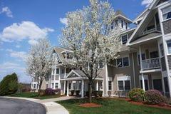 Flatgebouw met de lenteboom stock foto