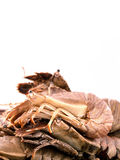 Flathead lobster, Lobster Moreton Bay bug, Oriental flathead lob. Ster isolate on white background Royalty Free Stock Photography