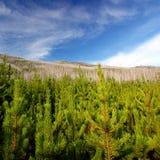 Flathead National Forest Montana Royalty Free Stock Photos