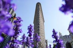 Flatiron Building with flowers stock photo