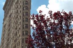 Flatiron Gebäude Stockfoto