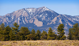 The Flatirons Mountains near Boulder, Colorado. The Flatirons and Green Mountain near Boulder, Colorado with a row of pine trees in the foreground and a yucca Stock Photos