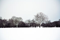 Flatland with snow in winter Royalty Free Stock Images