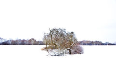 Flatland with snow in winter Royalty Free Stock Image
