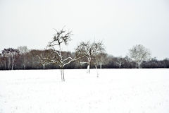 Flatland with snow in winter Stock Image