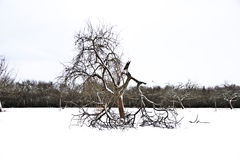 Flatland with snow in winter Stock Photography