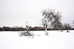 Flatland with snow in winter Royalty Free Stock Photo