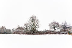 Flatland with snow in winter Royalty Free Stock Photos