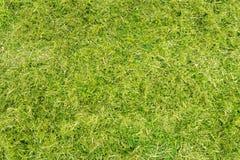 Flatlay,与青苔和杂草的cutted草 免版税库存照片