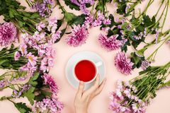Flatlay with beautiful chrysanthemum flowers and woman`s hand holding a cup of hibiscus tea. stock photo