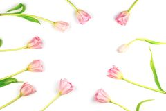 Flatlay with frame made of pink tulips. Spring arrangement Royalty Free Stock Photos
