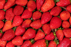 Flatlay, lots of fresh organic strawberries Royalty Free Stock Photo