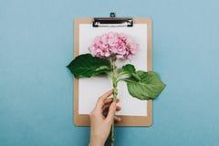 Flatlay różowy hortensia kwiat, schowek i kobiety ręka, fotografia stock