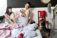 Flatmates with dogs Royalty Free Stock Image
