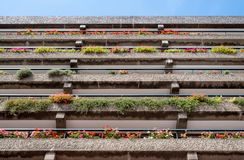 Flats built in post-war Brutalist style architecture at The Barbican in the City of London UK, with colourful flowers on the balco