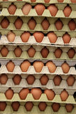 Flats of Eggs Stock Photography