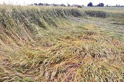 Flatten crop field after storm Stock Photos