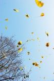 Flatternde Blätter Stockbild
