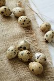 Flatview of some quail eggs on sacloth background. Top flatview of some quail eggs on sacloth background. Concept of healthy nutritions and natural cuisine royalty free stock photo
