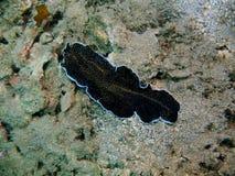 flatworm foto de archivo