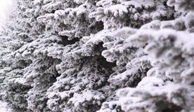 Flaumig aß im Schnee an einem Wintertag stockbild